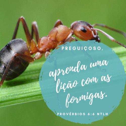 Formiga - Pv 6:6